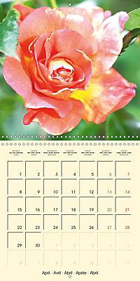 Rose Bloom (Wall Calendar 2019 300 × 300 mm Square) - Produktdetailbild 4