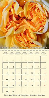Rose Bloom (Wall Calendar 2019 300 × 300 mm Square) - Produktdetailbild 12