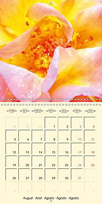 Rose Bloom (Wall Calendar 2019 300 × 300 mm Square) - Produktdetailbild 8