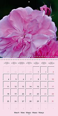 Rose Bloom (Wall Calendar 2019 300 × 300 mm Square) - Produktdetailbild 3