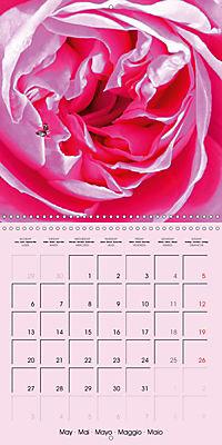 Rose Bloom (Wall Calendar 2019 300 × 300 mm Square) - Produktdetailbild 5