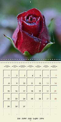 Rose Bloom (Wall Calendar 2019 300 × 300 mm Square) - Produktdetailbild 7