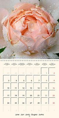 Rose Bloom (Wall Calendar 2019 300 × 300 mm Square) - Produktdetailbild 6