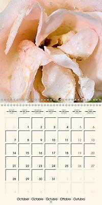Rose Bloom (Wall Calendar 2019 300 × 300 mm Square) - Produktdetailbild 10