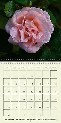 Rose Bloom (Wall Calendar 2019 300 × 300 mm Square) - Produktdetailbild 9