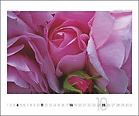 Rosen 2019 - Produktdetailbild 10