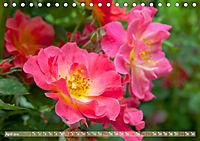 Rosen aus Uetersen (Tischkalender 2019 DIN A5 quer) - Produktdetailbild 4