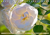 Rosen aus Uetersen (Tischkalender 2019 DIN A5 quer) - Produktdetailbild 1