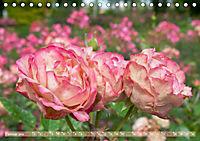 Rosen aus Uetersen (Tischkalender 2019 DIN A5 quer) - Produktdetailbild 2
