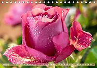 Rosen aus Uetersen (Tischkalender 2019 DIN A5 quer) - Produktdetailbild 6