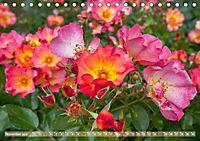 Rosen aus Uetersen (Tischkalender 2019 DIN A5 quer) - Produktdetailbild 11
