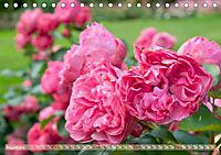 Rosen aus Uetersen (Tischkalender 2019 DIN A5 quer) - Produktdetailbild 8