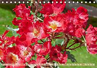 Rosen aus Uetersen (Tischkalender 2019 DIN A5 quer) - Produktdetailbild 10