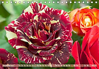 Rosen aus Uetersen (Tischkalender 2019 DIN A5 quer) - Produktdetailbild 12