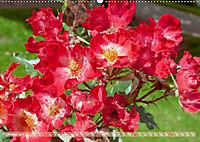 Rosen aus Uetersen (Wandkalender 2019 DIN A2 quer) - Produktdetailbild 10