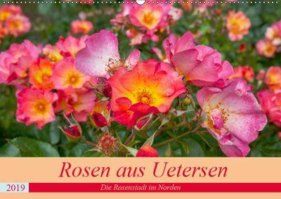 Rosen aus Uetersen (Wandkalender 2019 DIN A2 quer), Carmen Steiner / Matthias Konrad