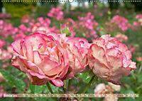 Rosen aus Uetersen (Wandkalender 2019 DIN A2 quer) - Produktdetailbild 2