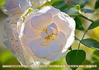 Rosen aus Uetersen (Wandkalender 2019 DIN A2 quer) - Produktdetailbild 1