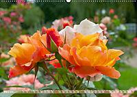 Rosen aus Uetersen (Wandkalender 2019 DIN A2 quer) - Produktdetailbild 3