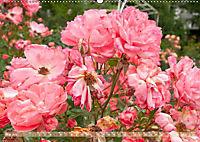 Rosen aus Uetersen (Wandkalender 2019 DIN A2 quer) - Produktdetailbild 5