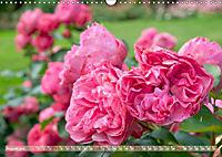 Rosen aus Uetersen (Wandkalender 2019 DIN A3 quer) - Produktdetailbild 8