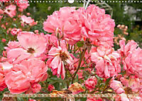 Rosen aus Uetersen (Wandkalender 2019 DIN A3 quer) - Produktdetailbild 5