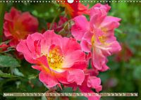 Rosen aus Uetersen (Wandkalender 2019 DIN A3 quer) - Produktdetailbild 4