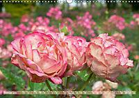 Rosen aus Uetersen (Wandkalender 2019 DIN A3 quer) - Produktdetailbild 2