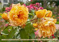 Rosen aus Uetersen (Wandkalender 2019 DIN A3 quer) - Produktdetailbild 7