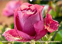 Rosen aus Uetersen (Wandkalender 2019 DIN A3 quer) - Produktdetailbild 6