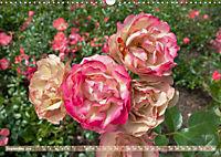 Rosen aus Uetersen (Wandkalender 2019 DIN A3 quer) - Produktdetailbild 9