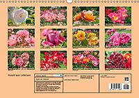Rosen aus Uetersen (Wandkalender 2019 DIN A3 quer) - Produktdetailbild 13