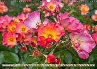 Rosen aus Uetersen (Wandkalender 2019 DIN A3 quer) - Produktdetailbild 11