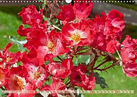 Rosen aus Uetersen (Wandkalender 2019 DIN A3 quer) - Produktdetailbild 10