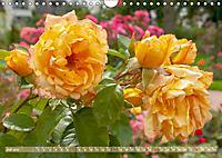 Rosen aus Uetersen (Wandkalender 2019 DIN A4 quer) - Produktdetailbild 7