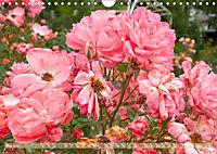 Rosen aus Uetersen (Wandkalender 2019 DIN A4 quer) - Produktdetailbild 5