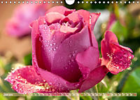 Rosen aus Uetersen (Wandkalender 2019 DIN A4 quer) - Produktdetailbild 6