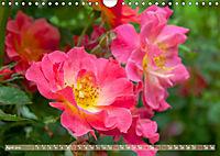 Rosen aus Uetersen (Wandkalender 2019 DIN A4 quer) - Produktdetailbild 4