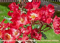 Rosen aus Uetersen (Wandkalender 2019 DIN A4 quer) - Produktdetailbild 10