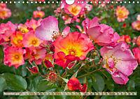 Rosen aus Uetersen (Wandkalender 2019 DIN A4 quer) - Produktdetailbild 11