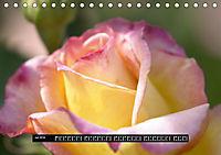 Rosen - Parade (Tischkalender 2019 DIN A5 quer) - Produktdetailbild 7