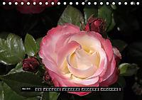 Rosen - Parade (Tischkalender 2019 DIN A5 quer) - Produktdetailbild 3