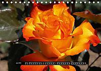 Rosen - Parade (Tischkalender 2019 DIN A5 quer) - Produktdetailbild 6