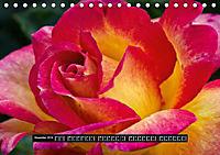 Rosen - Parade (Tischkalender 2019 DIN A5 quer) - Produktdetailbild 11