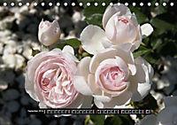 Rosen - Parade (Tischkalender 2019 DIN A5 quer) - Produktdetailbild 9