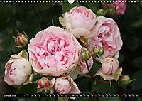 Rosen, Rosen ... arrangiert und am Strauch (Wandkalender 2019 DIN A3 quer) - Produktdetailbild 1