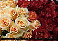 Rosen, Rosen ... arrangiert und am Strauch (Wandkalender 2019 DIN A3 quer) - Produktdetailbild 6