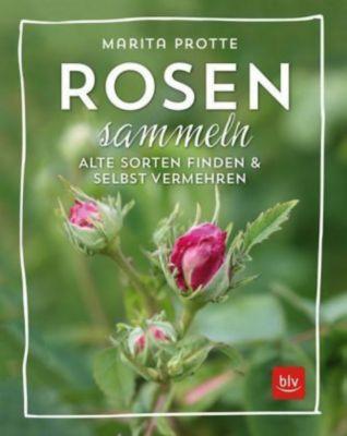 Rosen sammeln, Marita Protte