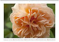 Rosen Schleswig-Holsteins (Wandkalender 2019 DIN A2 quer) - Produktdetailbild 2