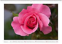 Rosen Schleswig-Holsteins (Wandkalender 2019 DIN A2 quer) - Produktdetailbild 3